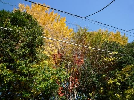 紅葉の木々.JPG