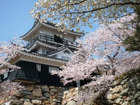 浜松城 桜.JPG