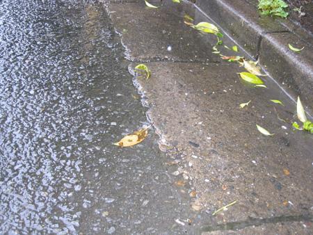 雨の路上.jpg